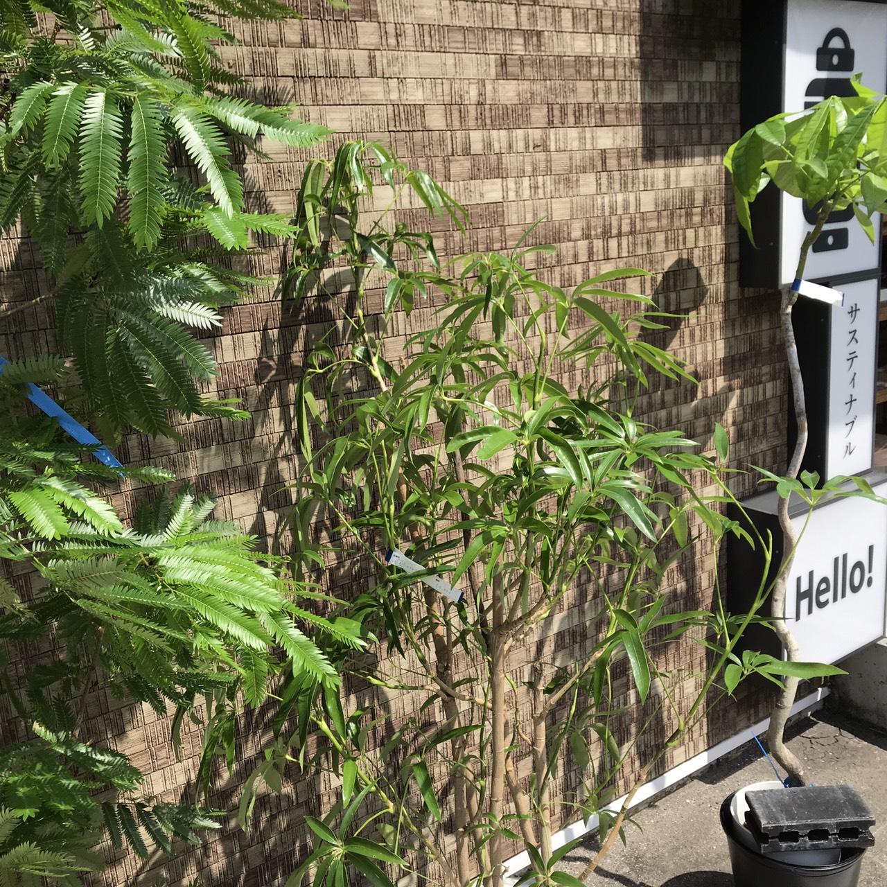 植物コーナー、続々新入荷です!